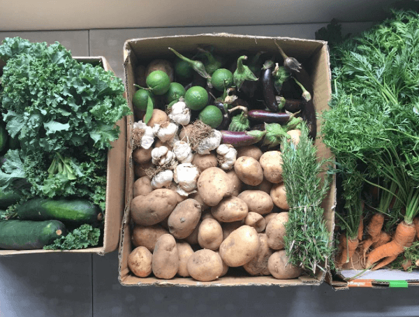 Boxes of vegetables including cucumber, kale, mushrooms, eggplant and carrots