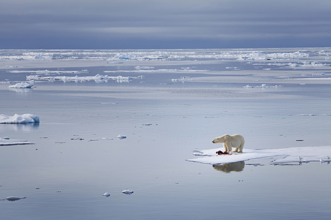 Polar bear stranded on a rapidly melting iceberg in the Arctic