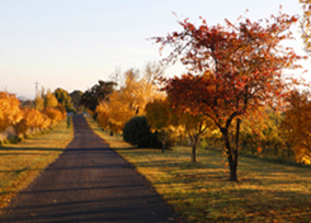 Photo of a picturesque road in Autumn near Orange - trees have red, orange and yellow leaves